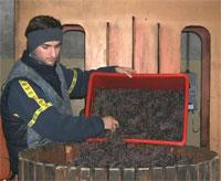 Preparazione dell'icewine di Croci