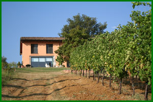 L'azienda vitivinicola Tollara vista dal vigneto