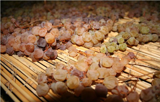 L'appassimento dell'uva per il Vinsanto - Barattieri