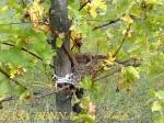 Un nido nei vigneti di Casa Benna - Val d'Arda