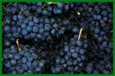 soleghi-uva