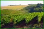 I vigneti dell'azienda vitivinicola La Tollara - Val 'Arda